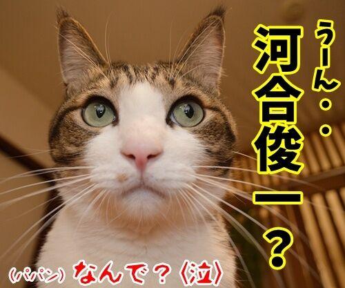 「ぐうかわ」ってどんな意味なの? 猫の写真で4コマ漫画 4コマ目ッ