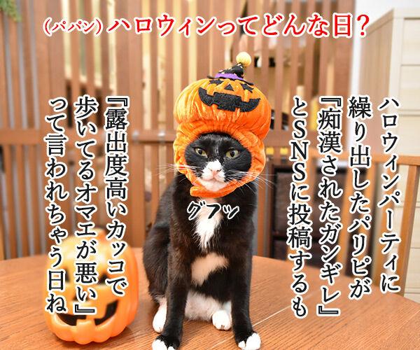 ハロウィンってどんな日? 猫の写真で4コマ漫画 1コマ目ッ