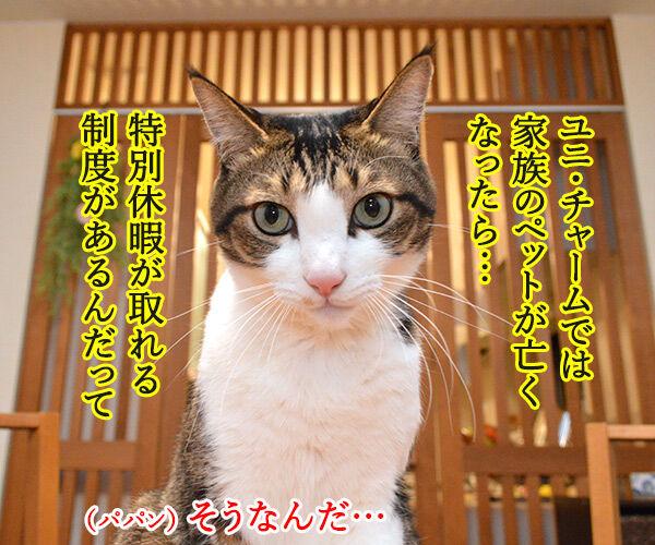 ユニ・チャームがペットとのお別れに特別休暇なんですってッ  猫の写真で4コマ漫画 1コマ目ッ