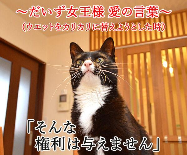 だいず女王様 愛の言葉 猫の写真で4コマ漫画 1コマ目ッ