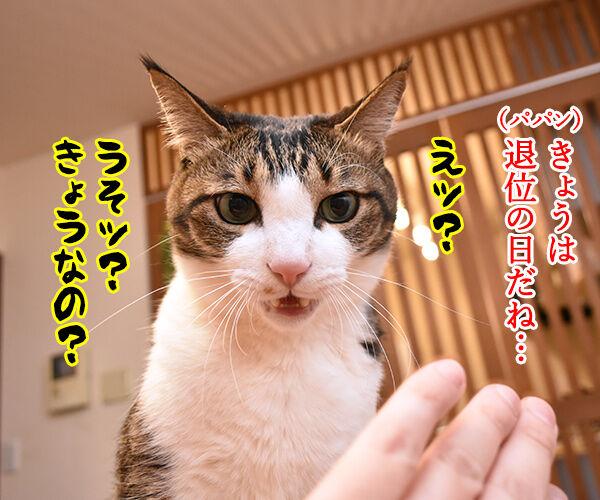 きょうは退位の日なんですってッ 猫の写真で4コマ漫画 1コマ目ッ