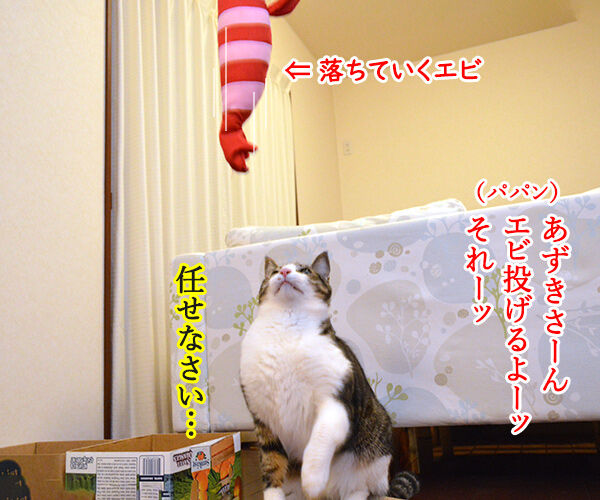 キャッチ アンド… 猫の写真で4コマ漫画 1コマ目ッ