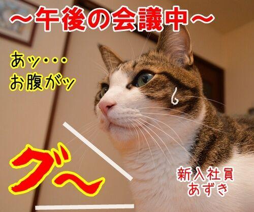 新入社員 あずき 其の二 猫の写真で4コマ漫画 1コマ目ッ