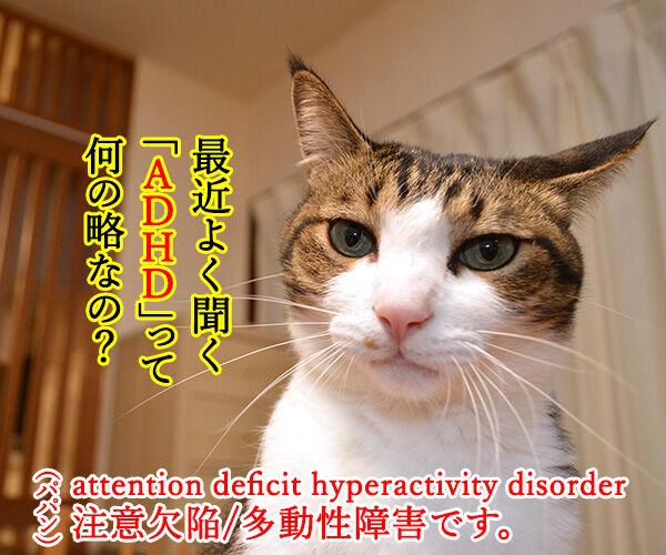 ADHDって何の略なの? 猫の写真で4コマ漫画 1コマ目ッ