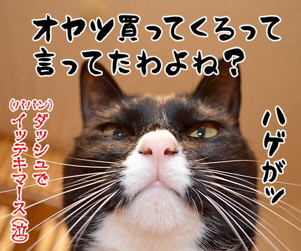教えてッ あずき先生ッ 猫の写真で4コマ漫画 4コマ目ッ