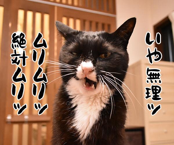 8月2日は何の日かしら? 猫の写真で4コマ漫画 3コマ目ッ