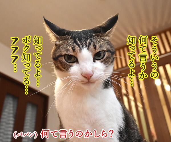 今年もあずだい年賀状を送っちゃうわよーッ 猫の写真で4コマ漫画 3コマ目ッ