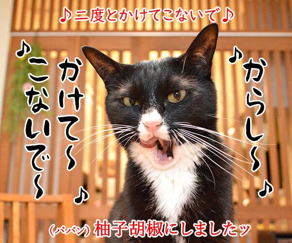 おでんのBGMといえばこの曲よねッ 猫の写真で4コマ漫画 5コマ目ッ