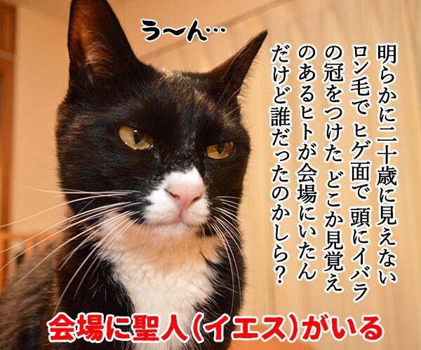 成人式あるある 猫の写真で4コマ漫画 4コマ目ッ