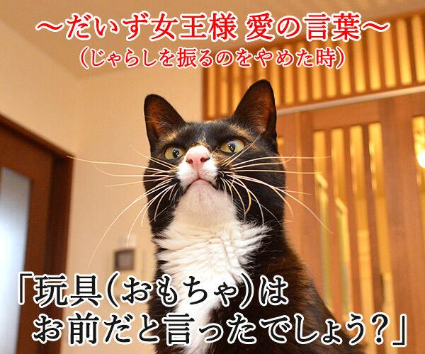 だいず女王様 愛の言葉 猫の写真で4コマ漫画 2コマ目ッ