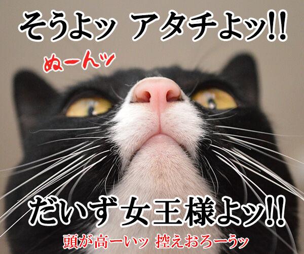 鏡の中の 猫の写真で4コマ漫画 4コマ目ッ