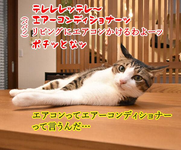 これって暑いときの猫さんあるあるかしら? 猫の写真で4コマ漫画 2コマ目ッ