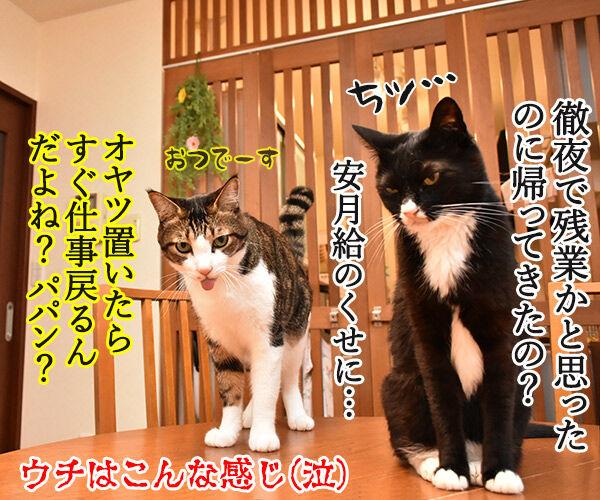 泣けちゃう漫画『おじさまと猫』って知ってる? 猫の写真で4コマ漫画 4コマ目ッ