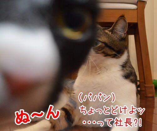 パパラッチ 猫の写真で4コマ漫画 4コマ目ッ