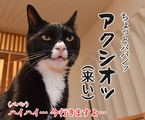 「ハリー・ポッター」を観た後は… 猫の写真で4コマ漫画 2コマ目ッ
