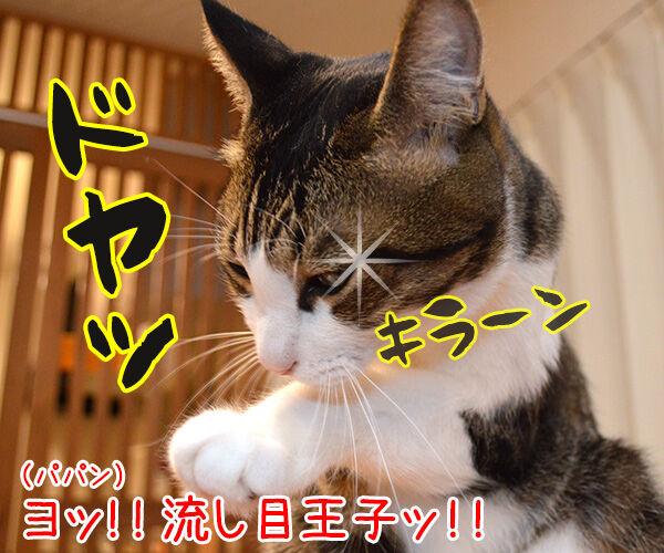 えぺえぺ 猫の写真で4コマ漫画 2コマ目ッ