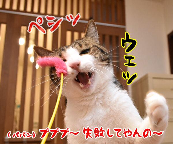 猫じゃらさんでウェイウェーイ 猫の写真で4コマ漫画 3コマ目ッ