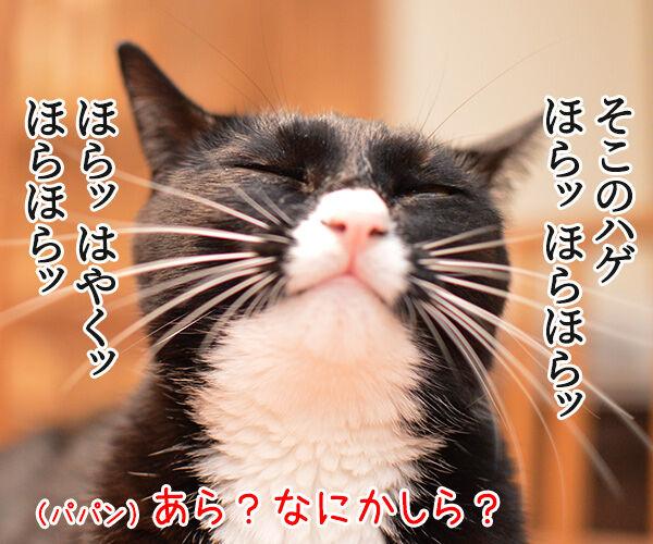 ほらッほらッ 猫の写真で4コマ漫画 1コマ目ッ
