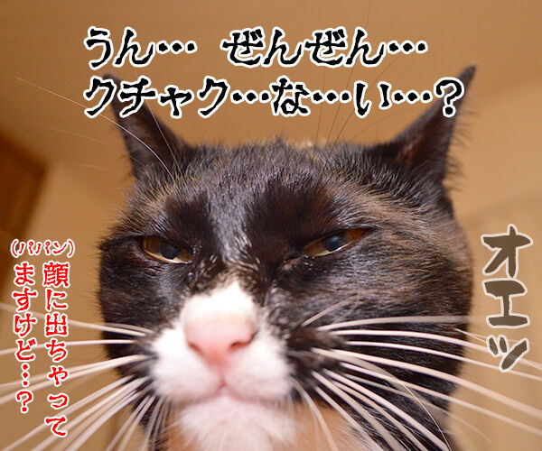 ボクのおててはクサクない 猫の写真で4コマ漫画 4コマ目ッ