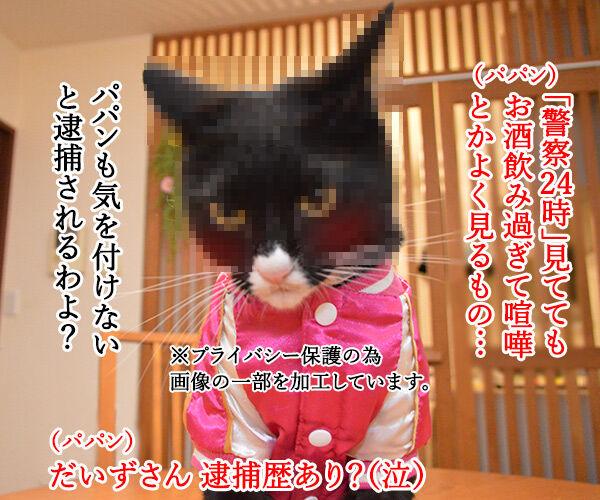 お酒のトラブルには気をつけなくちゃねッ 猫の写真で4コマ漫画 2コマ目ッ