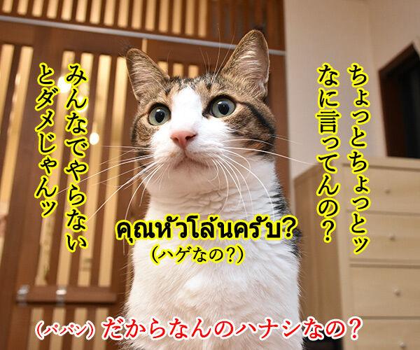 みんなでやらなきゃダメじゃんッ 猫の写真で4コマ漫画 3コマ目ッ