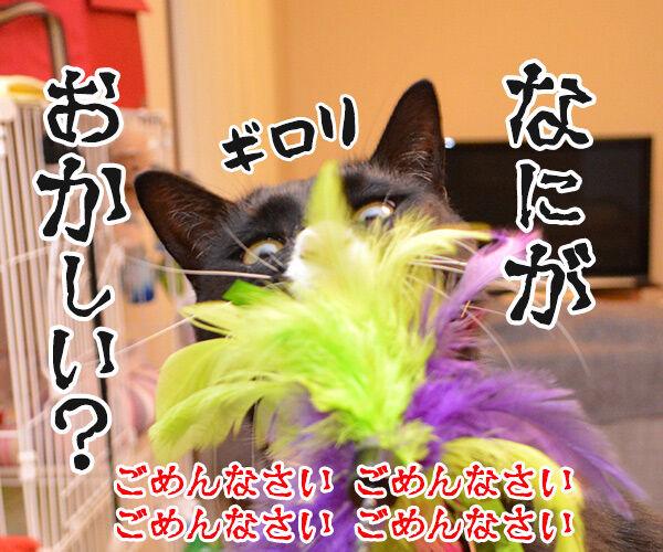 ねこじゃら、いっとく? 猫の写真で4コマ漫画 4コマ目ッ