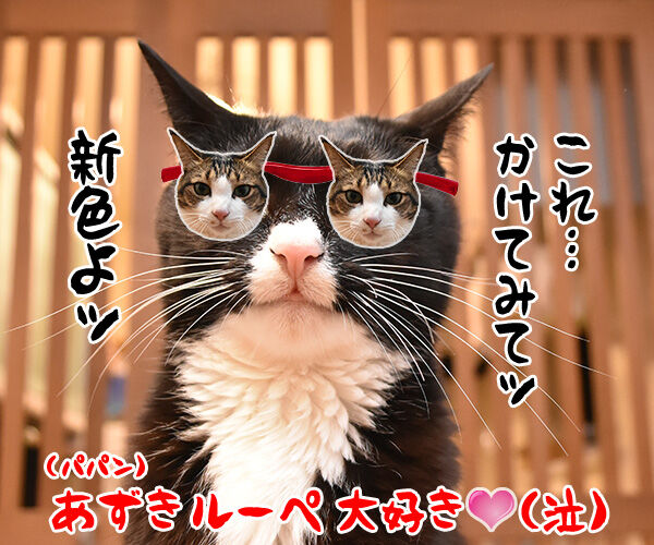 ハズキルーペのCMって知ってる? 猫の写真で4コマ漫画 4コマ目ッ