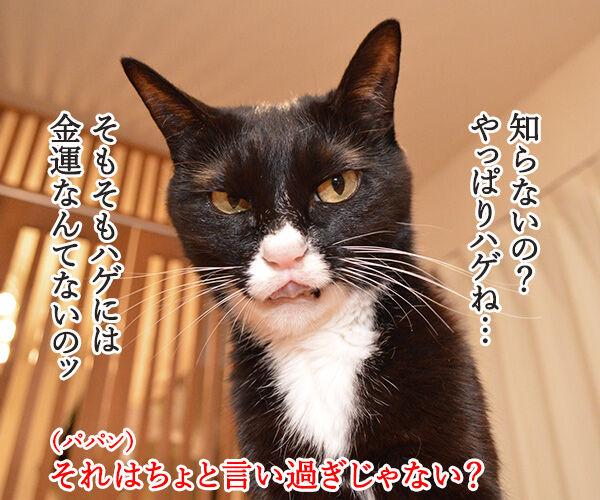 年末ジャンボは明日が抽選日なのッ 猫の写真で4コマ漫画 2コマ目ッ