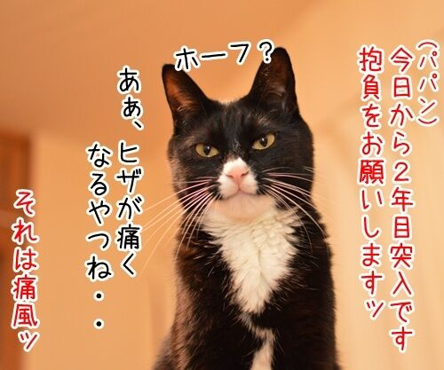二年目のほうふ 猫の写真で4コマ漫画 1コマ目ッ