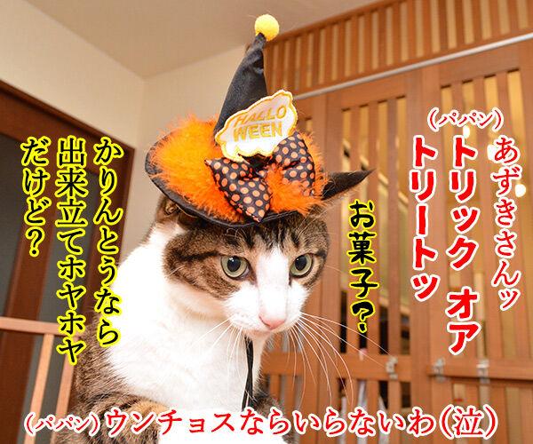 お菓子くれなきゃイタズラしちゃうぞ♥ 猫の写真で4コマ漫画 2コマ目ッ