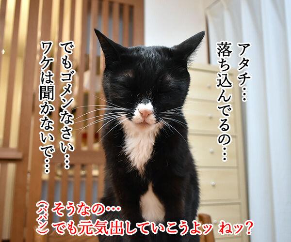 だいずさんが落ち込んでるのッ 猫の写真で4コマ漫画 2コマ目ッ