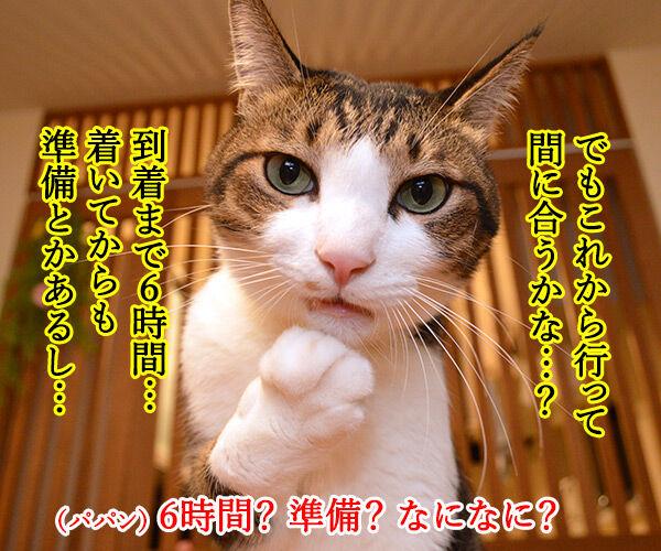 大晦日のできごと 猫の写真で4コマ漫画 3コマ目ッ
