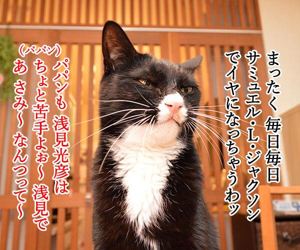 きょうは一段とサミー・ソーサらしいわよ? 猫の写真で4コマ漫画 3コマ目ッ