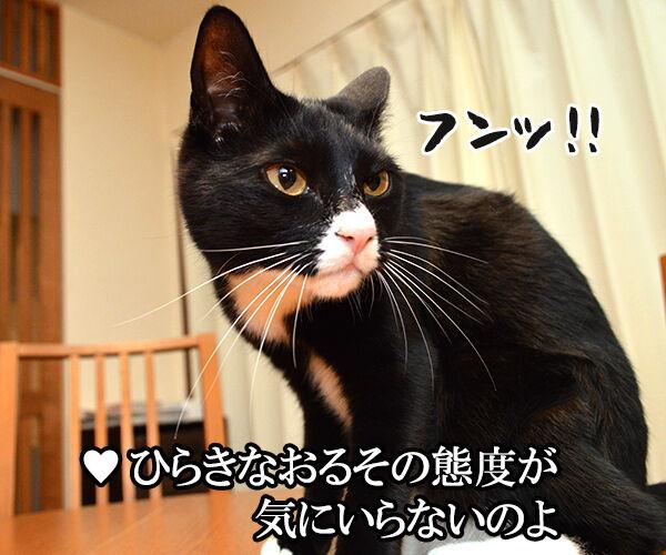 3年目の浮気 猫の写真で4コマ漫画 2コマ目ッ