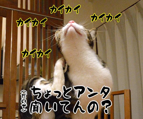 職業:女優 猫の写真で4コマ漫画 4コマ目ッ