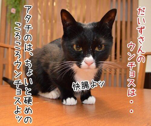 ウンチョス調査 猫の写真で4コマ漫画 1コマ目ッ