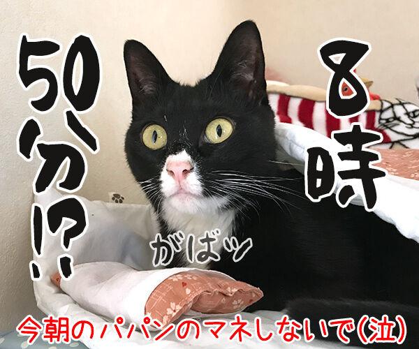 もう朝だよー 起きてー 猫の写真で4コマ漫画 4コマ目ッ