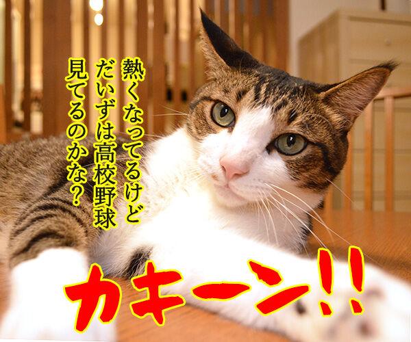 熱闘甲子園で熱くなるのよッ 猫の写真で4コマ漫画 3コマ目ッ