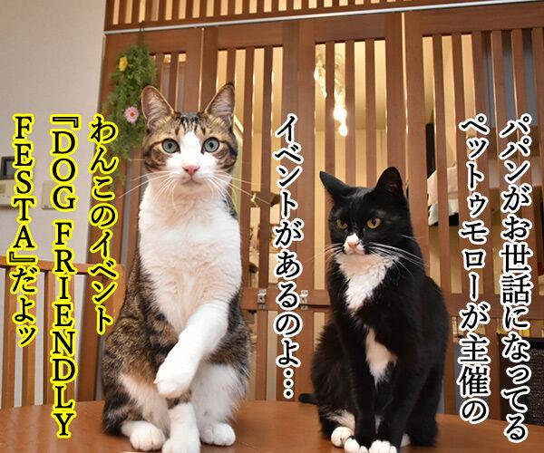 今週末はららぽーと豊洲のドッグイベントに行こうッ 猫の写真で4コマ漫画 1コマ目ッ
