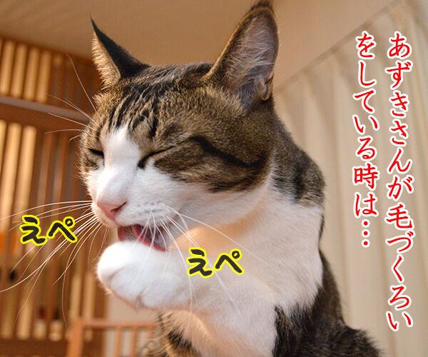 えぺえぺ 猫の写真で4コマ漫画 1コマ目ッ