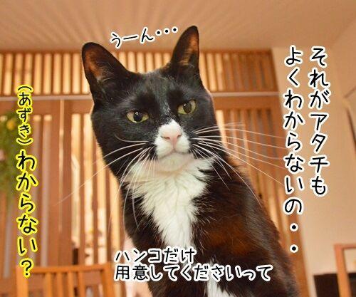 クロネコヤマトが来るから帰らなくちゃッ 猫の写真で4コマ漫画 3コマ目ッ