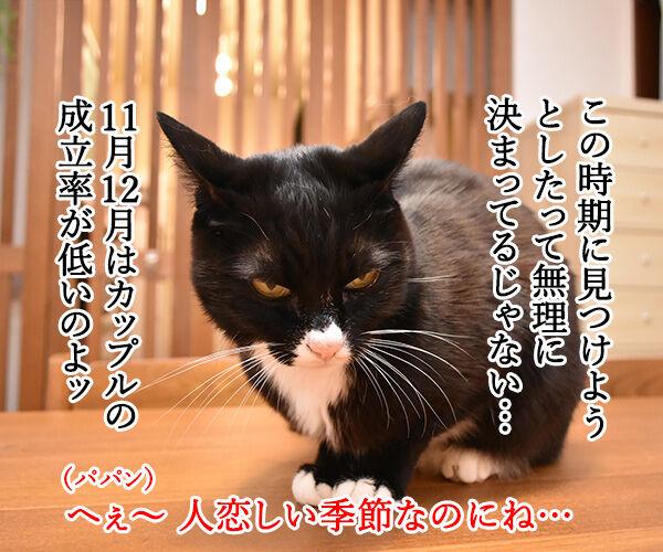 11月12月はカップル成立率が低いんですってッ 猫の写真で4コマ漫画 2コマ目ッ