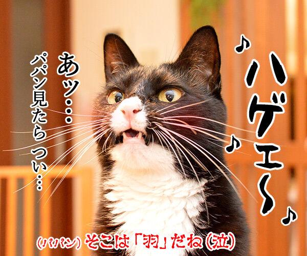 今日はパパンちの忘年会 猫の写真で4コマ漫画 4コマ目ッ