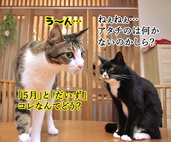 5月1日は何の日かしらッ? 猫の写真で4コマ漫画 3コマ目ッ