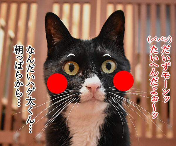 助けて!!だいずモン 其の二 猫の写真で4コマ漫画 1コマ目ッ