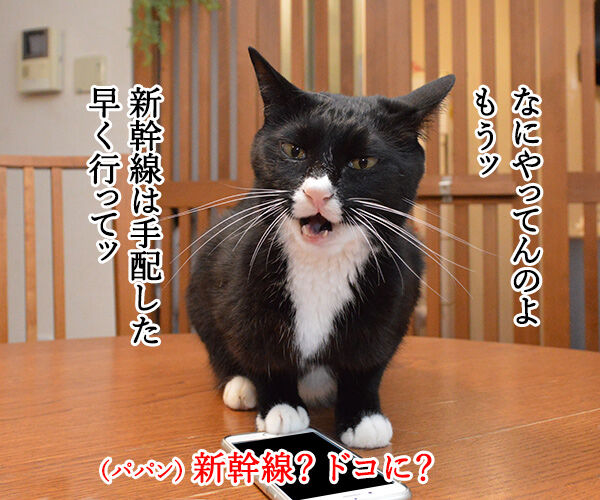 大晦日のできごと 猫の写真で4コマ漫画 2コマ目ッ