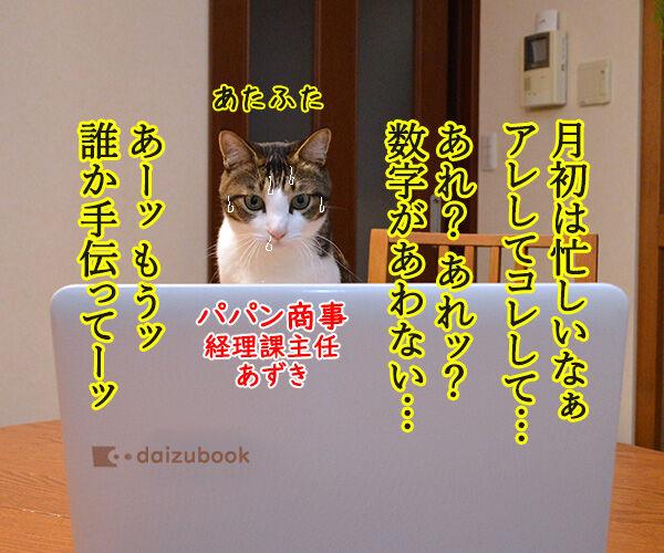 経理課あずきは大忙しッ 猫の写真で4コマ漫画 1コマ目ッ