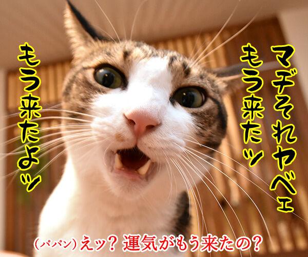 ショックアイさんの待ち受け画像で運気アップなのよッ 猫の写真で4コマ漫画 3コマ目ッ