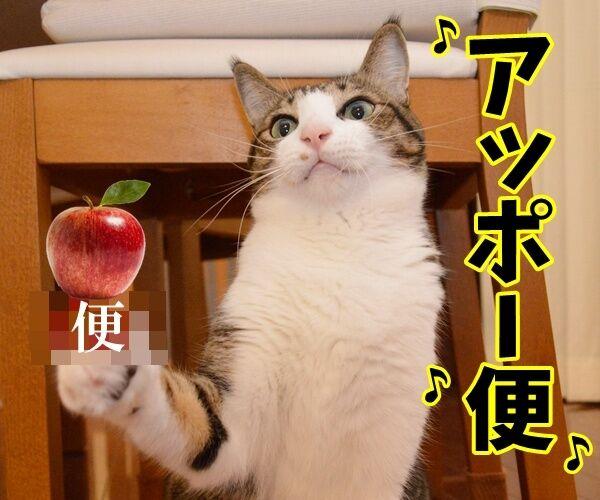 ペンパイナッポーアッポーペン(PPAP)って知ってる? 猫の写真で4コマ漫画 4コマ目ッ