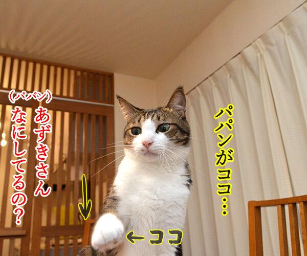 ボクがココで、パパンがココ 猫の写真で4コマ漫画 2コマ目ッ